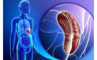 Чем опасно увеличение селезенки при гепатите С и в каких случаях дается инвалидность>
